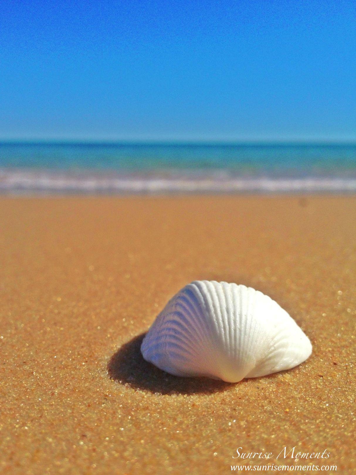 white-shell-blue-sky