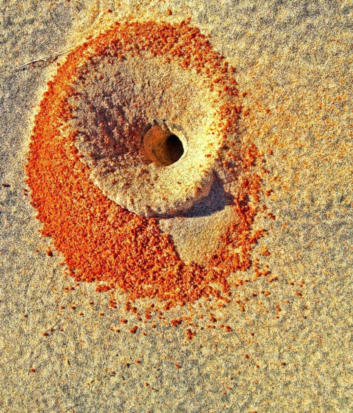 ant-hole-red-white-sand